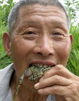 Eating Live Frogs