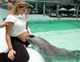 Dolphin Therapy For Pregnant Women