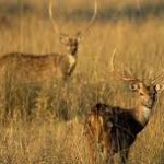 Dachigam National Park-