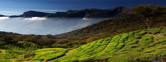anamudi tourist places in munnar