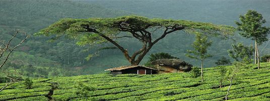 marayoor tourist places in munnar