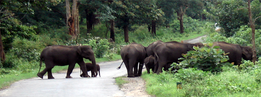 mudumalai park tourist places in ooty