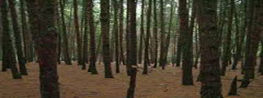 pine forest tourist places in kodaikanal