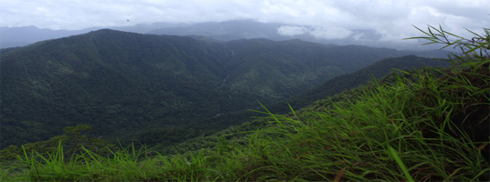 neelimala viewpoint tourist places in wayanad