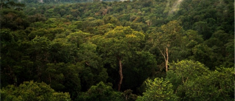 Top 10 Facts About Amazon RainForest