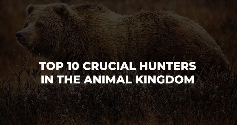 Top 10 Crucial Hunters in the Animal Kingdom